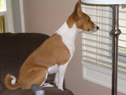 Sammie Sue watching daddy out the window