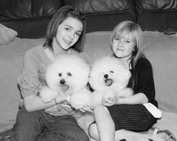 Two Bichon Frise Kami and Kelly