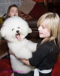 Bichon Frise Kelly 2yrs old