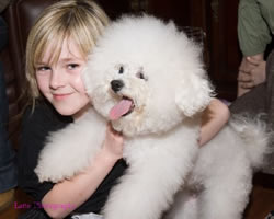 Bichon Frise Puppy Kelly