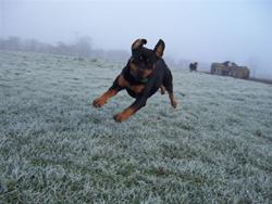 Running in Frosty Field